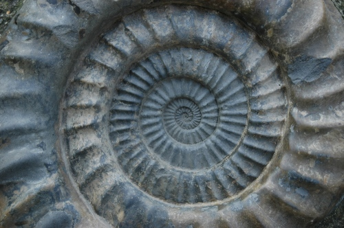 Jurassiccoast_ammonite_close_up_2005_copyright_jurassiccoastteam